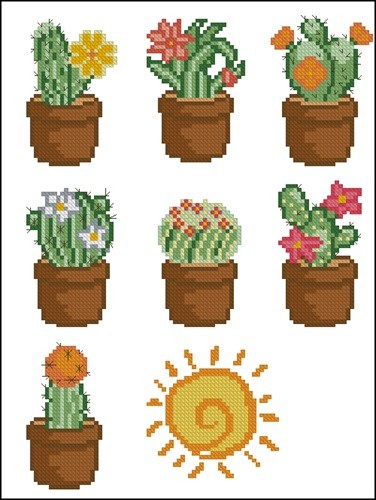 Разные кактусы в горшках