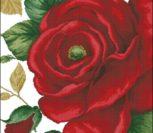 41103 Rose Red