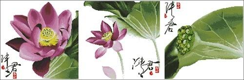 Flower-148 Qing Jun