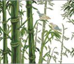 Bamboo (Бамбук)