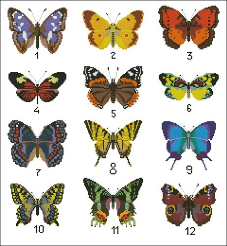 Коллекция бабочек