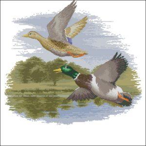 Mallard Ducks in Flight