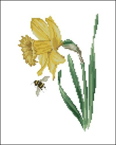 TG 1087 Daffodil