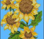 Sunflower Drama