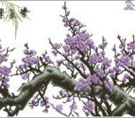 Фиолетовая цветущая сакура