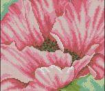 Pink Poppy - flower