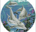 Царство дельфинов