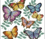 Butterfly profusion Dimensions