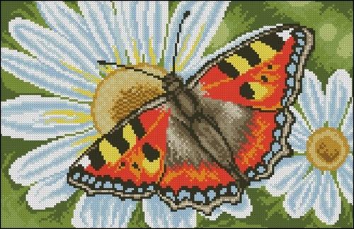 Motylek i Margerytki