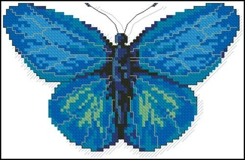 A Butterfly Aldania Raddei
