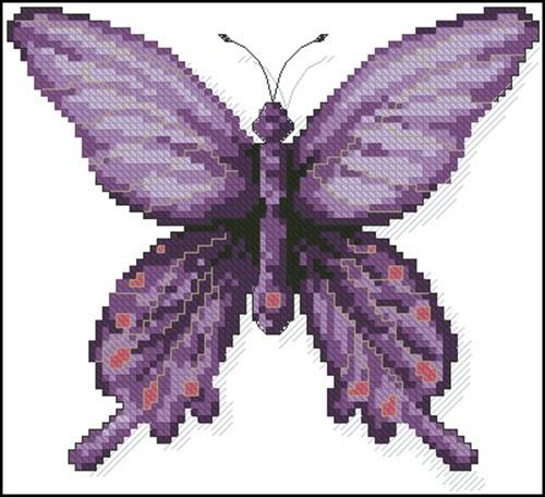 A Butterfly Chitoria Ulupi