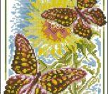 Butterflies Admiral
