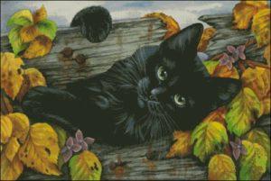 Черный кот приносящий удачу