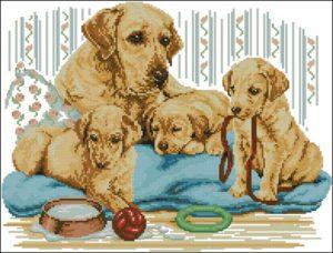 Golden Labrador Family