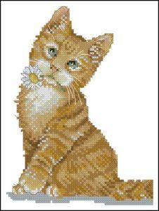 Кошка с ромашкой