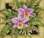 Орхидеи в рамке