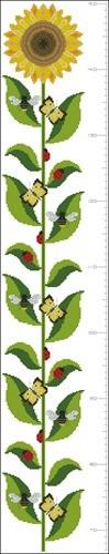 Sunflower Heightchart