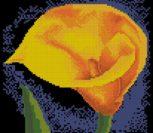 Yellow Flower Calla