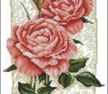 Cottage Rose in Bloom