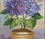 Hydrangea in Bloom