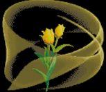 Тюльпан и вуаль