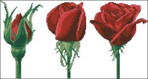 Трио роз