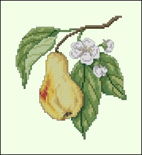 Груша цветет