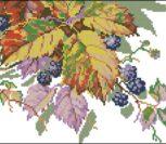 Осенняя ежевика