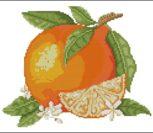 Summer Fruits – Orange