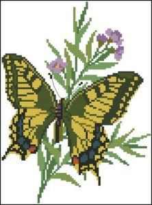 Papilio Machaon fra Alaska