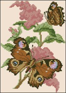 Peakock Butterfly