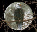 Eagle in Moonlight