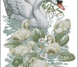 Swan and Signets