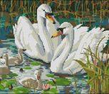Swan Scene