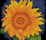 Sunflower, Yellow Flower serie