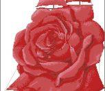 Парус роза