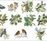 Коллекция птичек