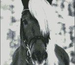 Лошадь с белой гривой