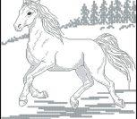 Лошадь контурами