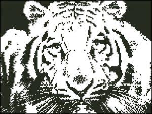 Взгляд тигра (контурами)