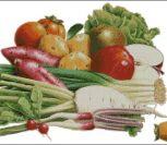 Овощи - редиска