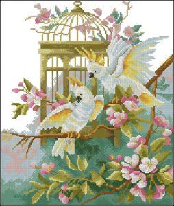 Белые попугаи