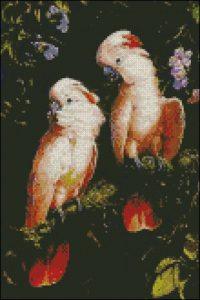Розовые попугаи