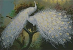 Белые павлины