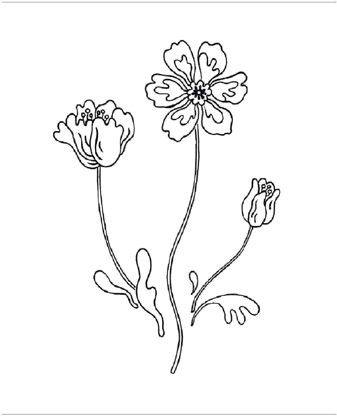 Полевые цветы гладью рисунок