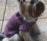 Сиреневый свитер для собачки