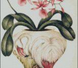 Орхидеи в вазе Фламинго.