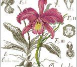 Flower&shadow-Orhides