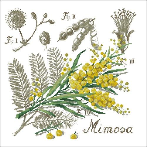 Мимоза (ботаническая)