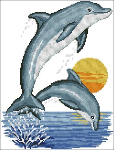 Два маленьких дельфина